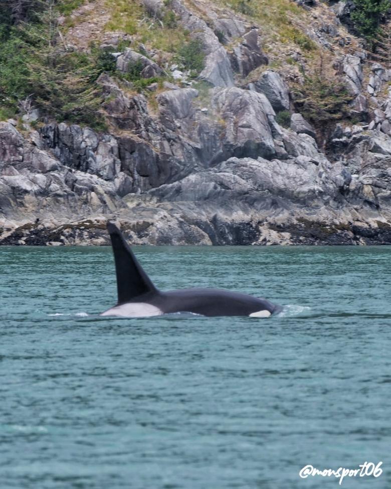 Orque Vancouver Island